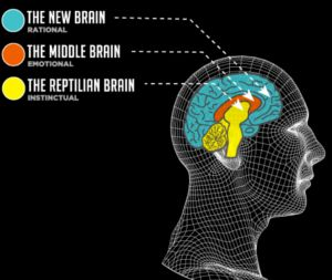 The 3 evolutionary stages of the brain - Reptilian, Limbic and Neocortex