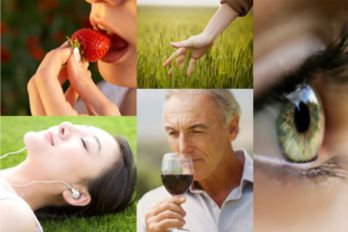 The 5 senses - hearing, sight, touch, smell and taste